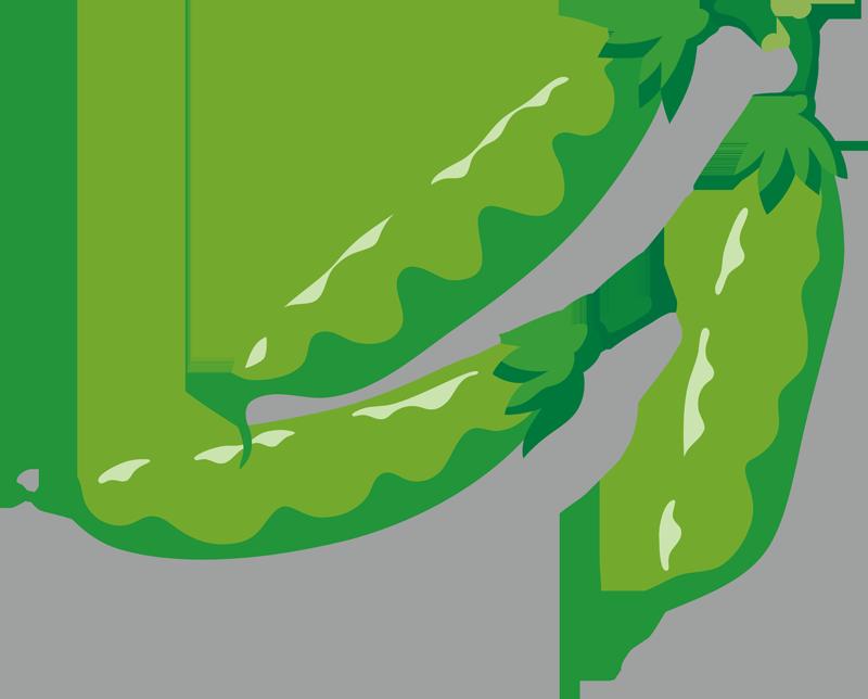 えんどう豆の激安通販