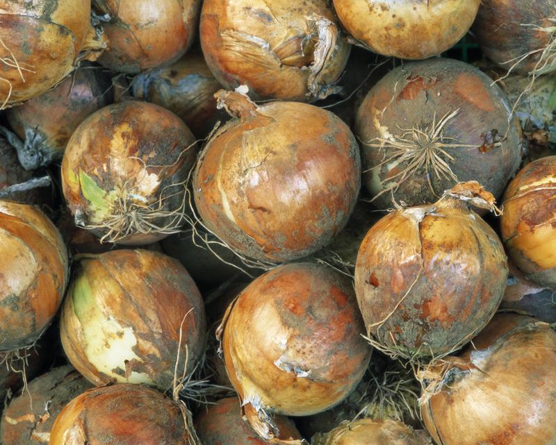 有機野菜の激安通販